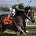 Majesto horse racing